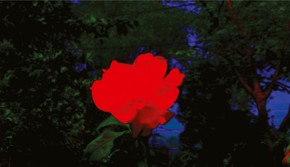 Still from Rose Selavee, 2012, digital video.